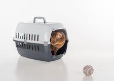 Abyssinische Katze, die im Kasten mit Spielzeugball sitzt Auf weißem Hintergrund Lizenzfreie Stockfotos