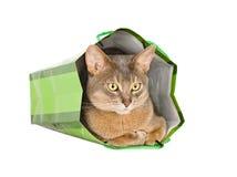 Abyssinische Katze im grünen Beutel Lizenzfreie Stockfotografie