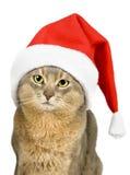 Abyssinische Katze im Weihnachtsmann-Hut Lizenzfreies Stockfoto