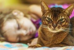 Abyssinische Katze und kleines Mädchen Stockfotos