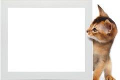 Abyssinische Miezekatze und Rahmen auf lokalisiertem weißem Hintergrund Stockfotos