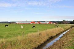 Abzugsgraben auf einem Bauernhofgebiet Lizenzfreie Stockfotografie