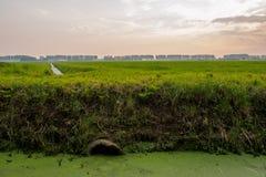 Abzugsgraben in der holländischen Landschaft Lizenzfreie Stockbilder