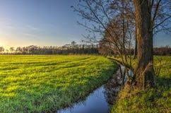 Abzugsgraben in einer grünen Polderlandschaft Stockbilder