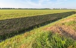 Abzugsgraben halbiert die niederländische Polderlandschaft Stockbild