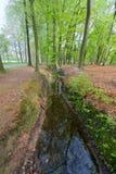 Abzugsgraben im Wald Lizenzfreies Stockbild