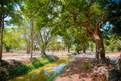 Abzugsgraben mit Baum Stockfotografie