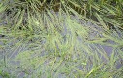 Abzugsgraben mit Gras Stockfoto