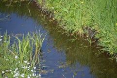 Abzugsgraben mit Gras und Blumen Stockfoto