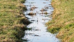 Abzugsgraben und Wiesen im waterland Friesland, selektiver Fokus Stockbild