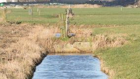 Abzugsgraben und Wiesen im waterland Friesland, selektiver Fokus Stockfotos