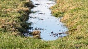 Abzugsgraben und Wiesen im waterland Friesland, selektiver Fokus Lizenzfreies Stockfoto
