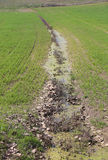 Abzugsgraben voll von Wasserfeldern, weil der Boden nicht MO absorbiert Stockfotos