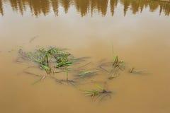 Abzugsgraben-Wasser Lizenzfreie Stockfotos