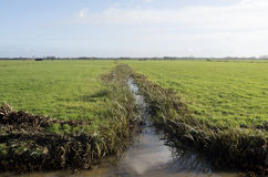 Abzugsgraben zwischen den Weiden. Stockbilder