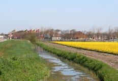 Abzugsgraben zwischen zwei Blumenzwiebelfeldern Stockfotografie