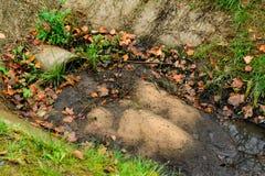 Abzugskanalgussfehlerentleerungs-Abwasserwasser in einem regnerischen Herbst Stockbilder