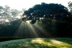 Abzweigender Boden des Golfs morgens Lizenzfreie Stockbilder