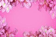 Acácia roxa Imagem de Stock Royalty Free