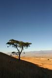 Acacia africana classica sul pendio di collina con i campi e catena montuosa nella distanza fotografia stock libera da diritti