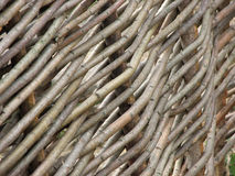Acacia als achtergrond, textuur Royalty-vrije Stock Foto