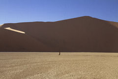 Acacia antica a Deadvlei vicino a Sossusvlei, Namib Fotografia Stock