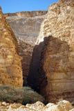 Acacia in Barak canyon Royalty Free Stock Photo