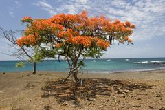 Acacia on the beach (Floriana island) Royalty Free Stock Photos