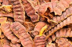 Acacia Concinna Royalty Free Stock Photos