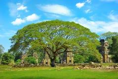 Acacia en el fondo de las ruinas. Imágenes de archivo libres de regalías