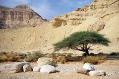 Acacia et bouders Images libres de droits