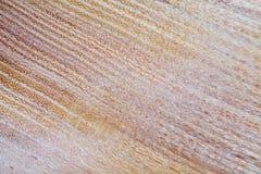 acacia faux - fond de texture en bois de pseudoacacia de robinia dans la macro pousse de lentille images libres de droits