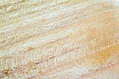 acacia faux - fond de texture en bois de pseudoacacia de robinia dans la macro pousse de lentille photographie stock libre de droits