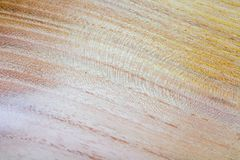 acacia faux - fond de texture en bois de pseudoacacia de robinia dans la macro pousse de lentille photos stock