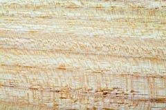 acacia faux - fond de texture en bois de pseudoacacia de robinia dans la macro pousse de lentille image stock