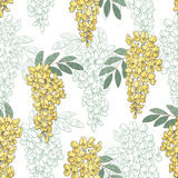 Acacia flower color graphic seamless pattern sketch illustration Stock Image