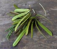 Acacia fruit. Acacia seeds Wooden floor royalty free stock photos