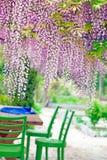 Acacia in the garden Royalty Free Stock Photo