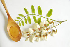 Acacia honey Royalty Free Stock Photos