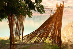 Acacia met een met stro bedekte muur op de kust Royalty-vrije Stock Foto