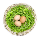 Acacia pennata and egg in basket on background Royalty Free Stock Photo