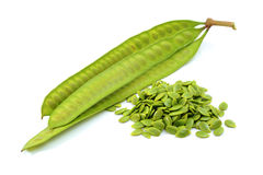 Acacia seeds royalty free stock photography