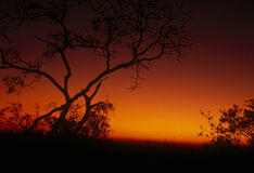 Acacia Sunset Royalty Free Stock Photos