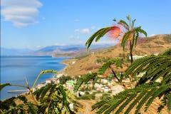Acacia sur un fond du paysage de montagne et de la mer (julibrissin d'Albizia) Photo libre de droits