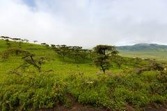 Scenic foggy of Maasai boma hut enclosure near Lake Magadi at Ngorongoro Crater in Tanzania, East Africa. Scenic foggy of Maasai boma hut enclosure near Lake royalty free stock photography