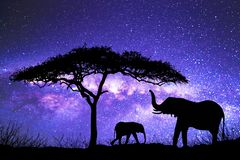 Free Acacia Tree Standing Silhouetted Against The Milky Way Royalty Free Stock Photography - 154456057