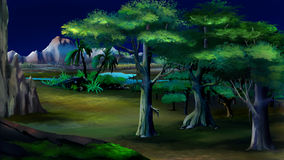 Acacia Trees in Africa. Night View Stock Photography