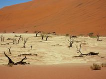 Namibia, Dead Vlei Valley with partly dead trees royalty free stock images