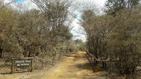 Acacia trees. National park tropical Stock Image