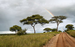 Acacia trees with rainbow Stock Photo